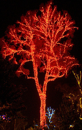 Red Tree Phoenix Zoo Lights Phoenix, AZ December 22, 2012