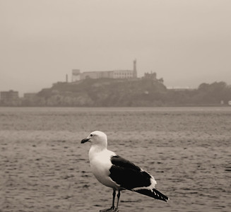 It was a grey and cloudy day... Alcatraz Island San Francisco, CA December 5, 2012