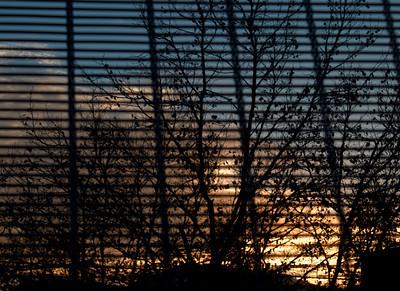 Sunrise through Fence