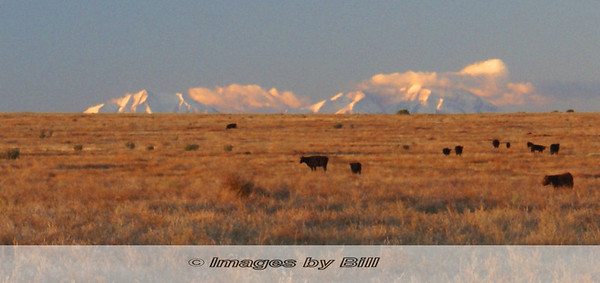 Mountains and Cows Pueblo, CO  October 11, 2006