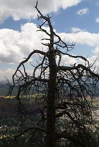 09/01/08  Tree and Landscape, on Elden Lookout Trail Flagstaff, AZ