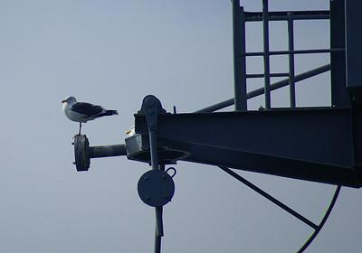 11/22/08  Seagulls San Diego, CA