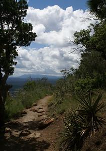 09/01/08  On the trail Elden Lookout Trail Flagstaff, AZ