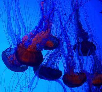 12/10/08  Jellyfish at Georgia Aquarium