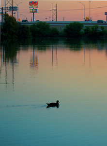 Whata Duck Sunrise Brownsville, TX October 1, 2010