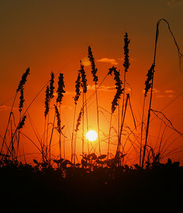 Sunrise and Reeds South Padre Island, TX October 3, 2010