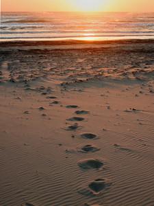 Footsteps at Dawn South Padre Island, TX October 3, 2010