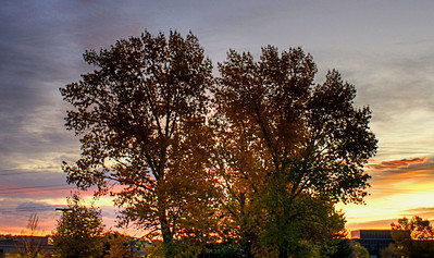 Fall leaves at Sunrise Denver, CO October 25, 2011