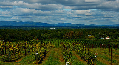 Raffaldini Vineyard Scenic North Carolina October 1, 2011