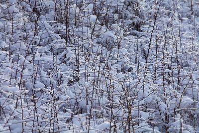Buisson de givre