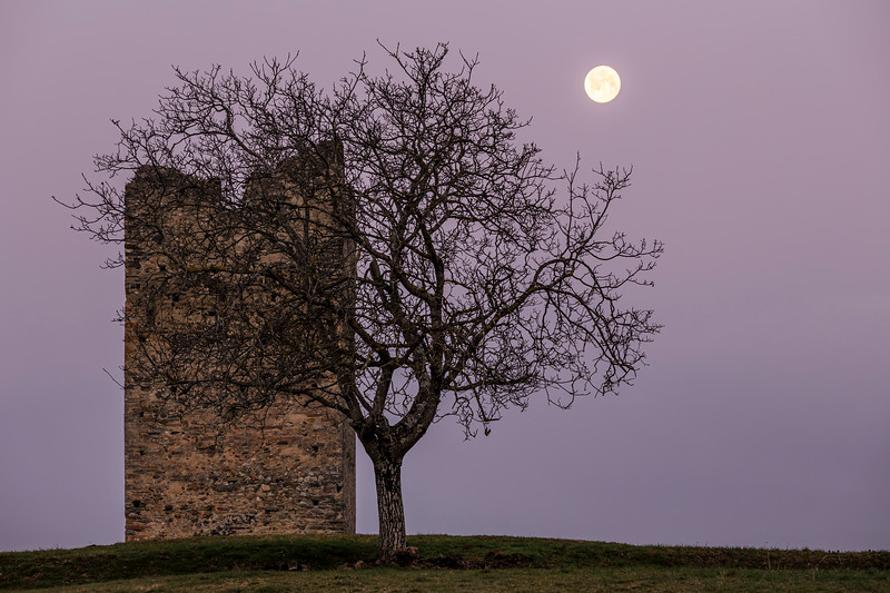 The Tower, the Moon,and  the Tree