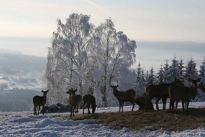 Når det blir kalt senker dyrene tempoet og skrur ned forbrenningen.