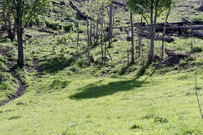 Hjorteoppdrett er en ny næring i Norge