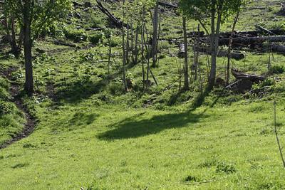 Når hjorten beiter blir landskapet grønnere for vært eneste år.