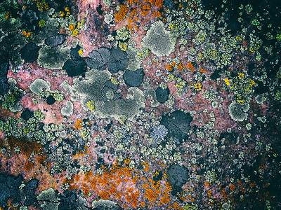 Rock and Lichen