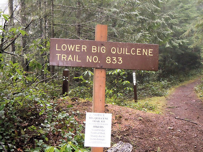 Olympic NF Roads, Solo; Outside of Quilcene - February 2011