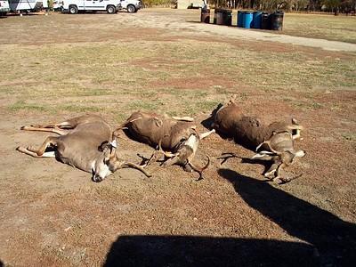 2000-2006 Wyoming Hunting