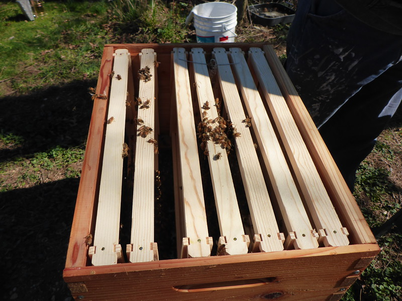 Putting the frames back in the hive