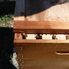 Sliding the cover onto the hive to avoid crushing bees