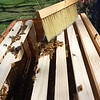 Brushing bees into the hive so we can put the cover on
