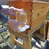 Installing the feeder - the hive needs to be fed sugar water and pollen for about 3 weeks