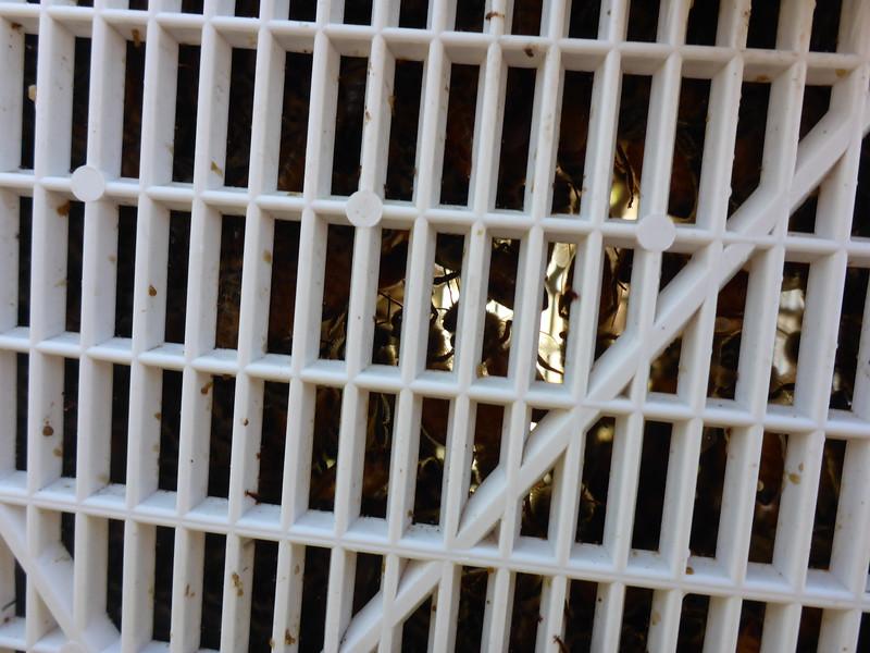 Bees in captivity