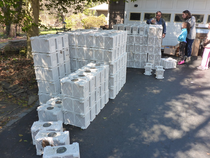 This is over 100 'packages' of bees ready to be picked up by beekeepers at a local residence.