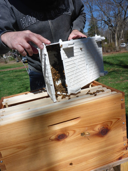 Dumping bees