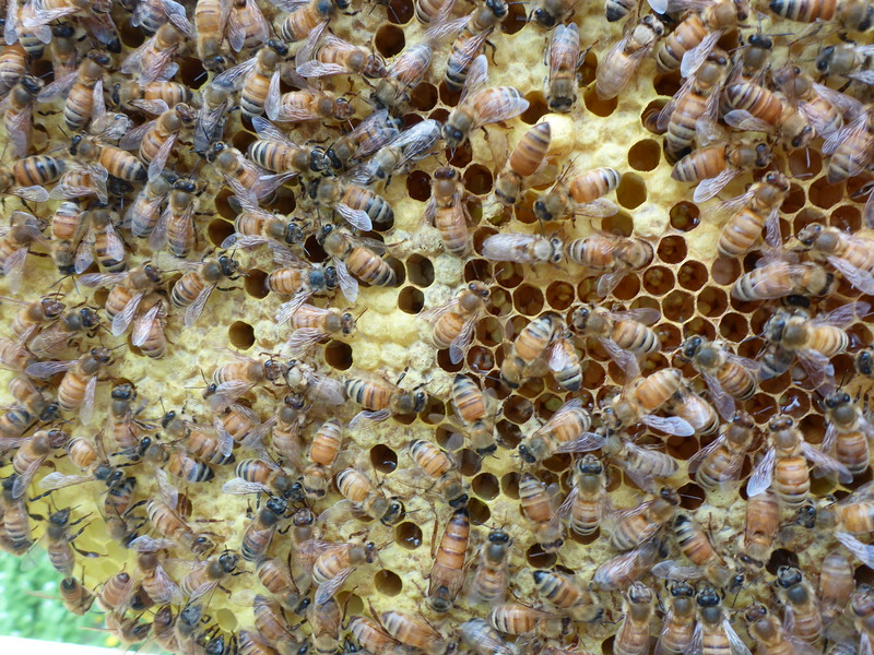 Queen - center at lower edge of photo
