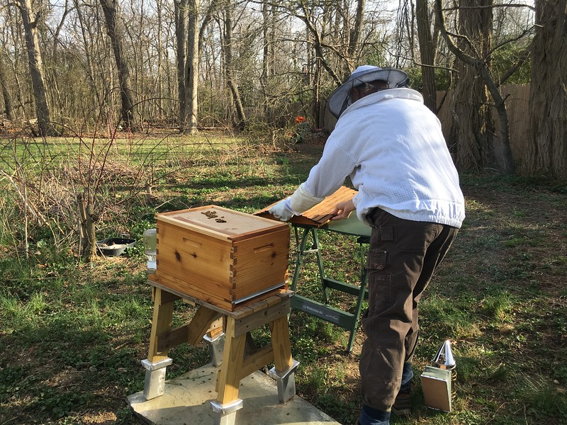 So, 3 days after putting bees in the hive, I opened it to check on the queen.  The queen has been isolated in her cage so that the unrelated workers can get to accept her as their queen.