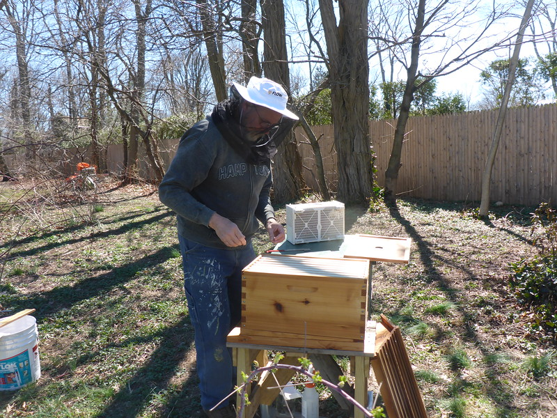 Opening the hive to put the bees in