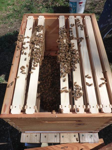Bees in the hive!  Yay!
