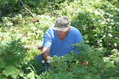 Dad picing Huckleberries on Spades Mt