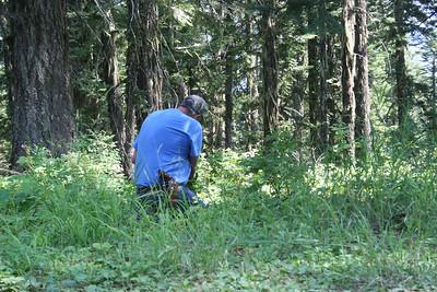 Dad picking huckleberries