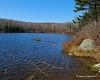 Chapin Pond
