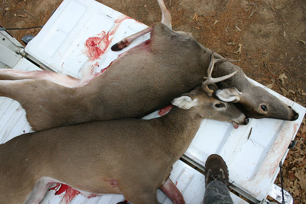 Ann's Deer 2005