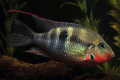 Aquaria