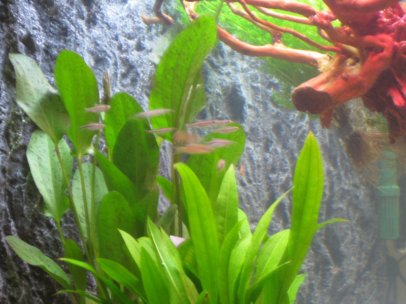 Fish are swimming!