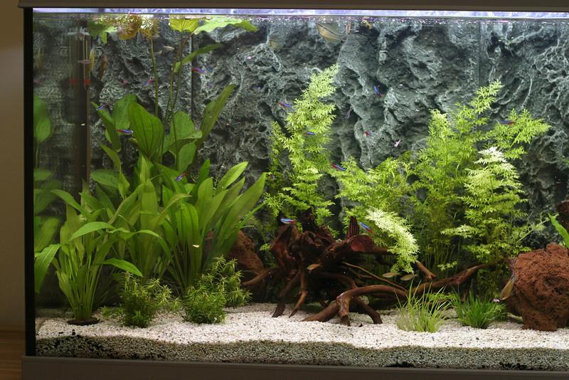 Left side of the aquarium