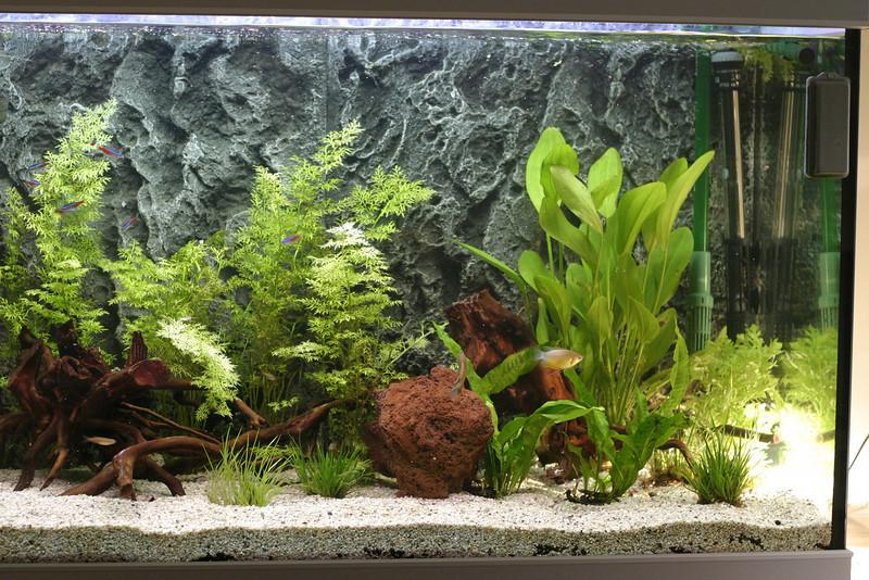 Right side of the aquarium