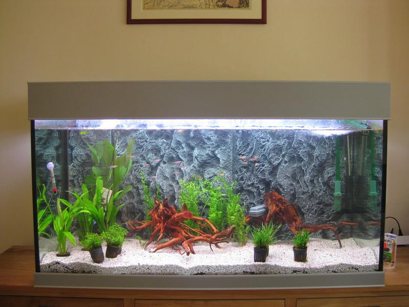 Aquarium looking a bit like a normal