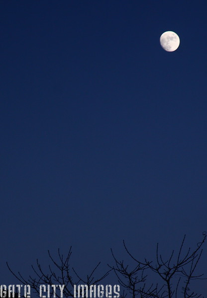 IMG4_47097 Moon and branches dpptrm