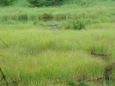 Beaver Bog on 113