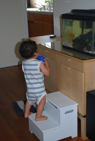 "Baby Arthur Loves Looking at ""BABA,"" Our Pet Fish"