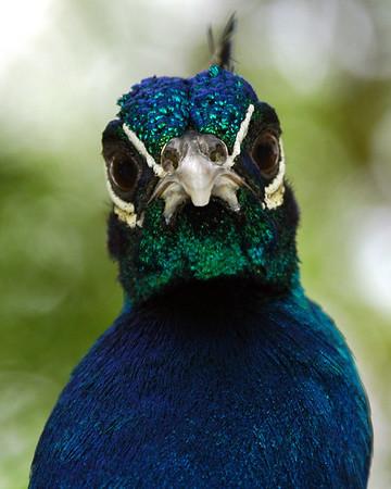 Bird Upload Album