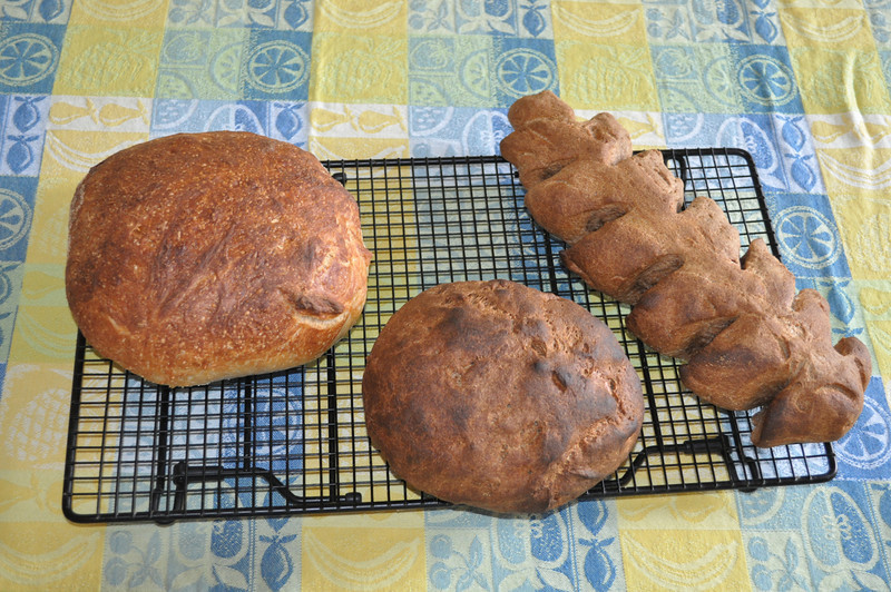 These are made from No-kneeding five miniute recipes. White and whole Wheat.