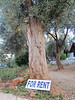 Tree for rent in Kas :-)