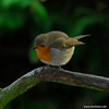 Robin, Flash used