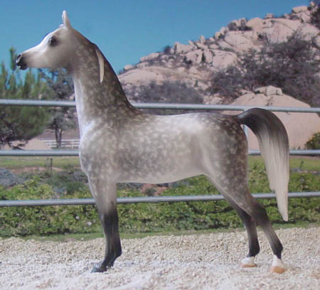 Chaney Arabian Mare, CMG china by AA