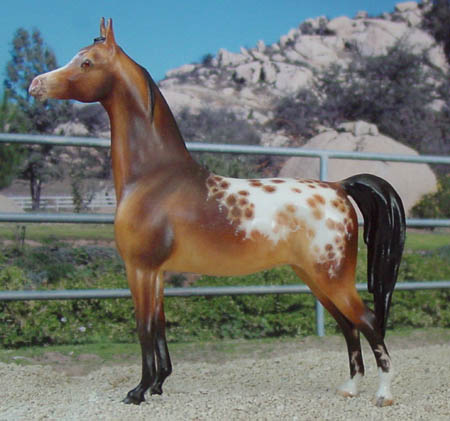 Chaney Arabian Mare CMG china by AA